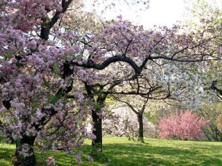 обои Цветущий весенний сад и опадающие лепестки фото