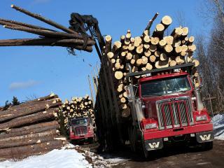 обои Western Star 4900 FA Logging Truck 2008 сила фото