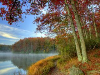 обои Осенний лес с красной листвой у озера туманного фото