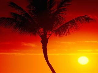 обои Пальма на фоне красного заката фото