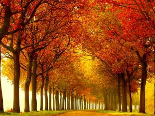 обои для рабочего стола: Ряд деревьев у дороги осенью