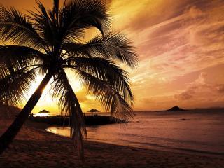 обои Закат солнца и пальма на берегу фото