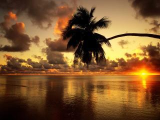обои Красивый закат на фоне спокойного моря и пальмы фото