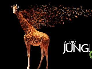 обои Жираф и аудио джинглы фото