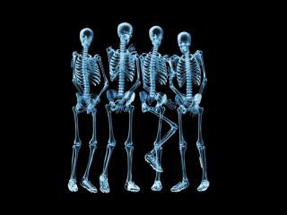 обои Скелеты фото