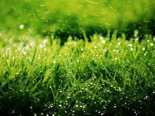 обои Весенний дождь над травой фото