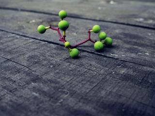 обои Зеленые плоды веточки на досках фото
