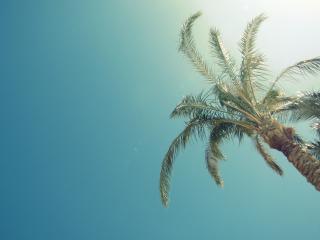 обои Пальма на фоне безоблачного неба фото