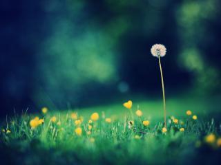 обои Летняя лужайка на размытом фоне фото