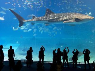 обои Люди в океанариуме фотографируют акулу фото