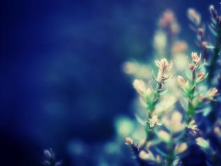 обои Синий фон и стебельки растений фото