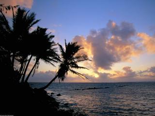 обои Вечер на тропическом берегу у моря фото