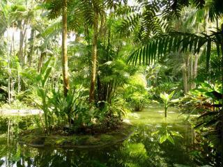 обои Водоем в тропическом лесу фото