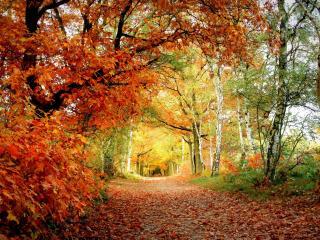 обои Дорожка обсаженная деревьями пожелтевшими осенью фото