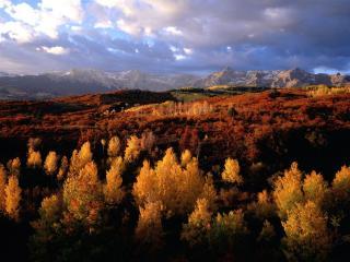 обои Перекрашенные деревья осенью фото