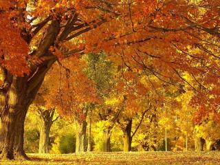 обои Пожелтевшие деревья в старом парке фото