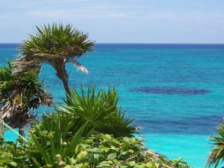обои Тропические растения у бирюзовой воды океана фото