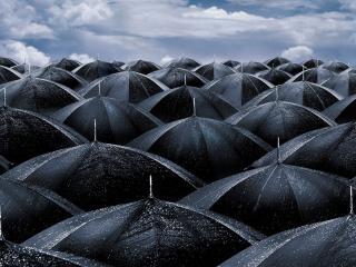 обои Зонтики фото