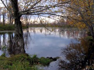 обои Деревья с опадающей листвой, у осеннего пруда фото