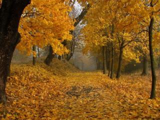 обои Дорожка засыпанная кленовыми желтыми листьями фото