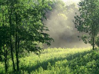 обои Лесная поляна фото
