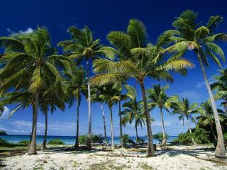 обои Група пальм на белом берегу фото