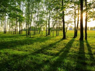 обои Групка деревьев у поля возле деревни фото