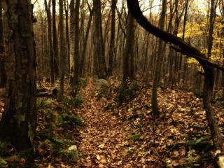 обои Земля в лесу густо покрытая опавшими листьями фото