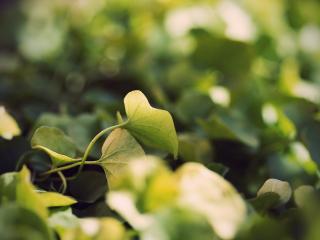 обои Листья растeния фото