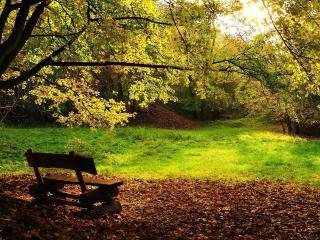 обои Скамейка под деревом и опадающая листва фото
