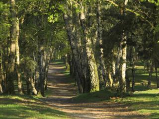 обои Через красивый лес протоптанная тропа фото