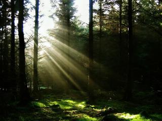 обои Лучи солнца в темном лесу фото