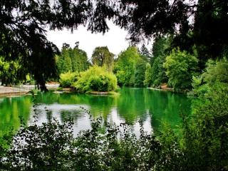 обои Летний пруд с островком, в парке фото