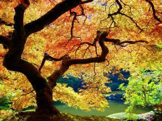 обои Желто-красная листва осени у пруда фото