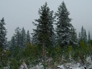 обои Зима в лесу на склоне фото