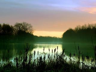 обои Камыши у реки под вечер фото