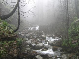 обои Небольшой ручей, в туманном летнем лесу фото
