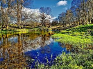 обои Небольшой пруд весной фото
