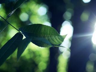 обои Молодая веточка с листьями в лесу фото