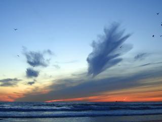 обои для рабочего стола: Птицы вечером над морем