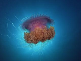 обои Медуза в океане фото