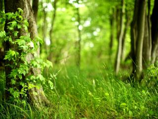 обои Трава в летнем лесу фото