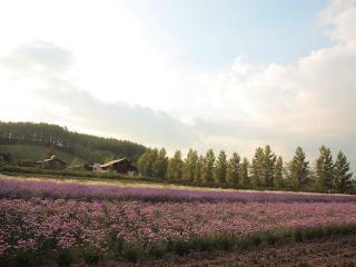 обои Цветущий огород фото