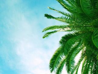 обои Ярко зеленые листья пальмы фото