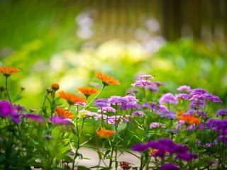 обои Цветы фиолетовые и оранжевые фото