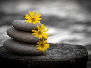 обои Экибана из камней и цветов фото