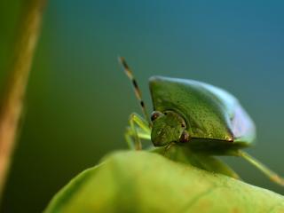обои Зеленый жук на листе фото