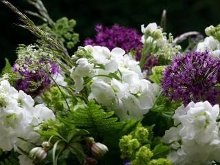 обои Разные цветы фото