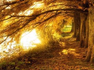 обои Сказочный осенний лес фото