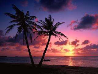 обои Красивый закат на фоне пальм и спокойного моря фото